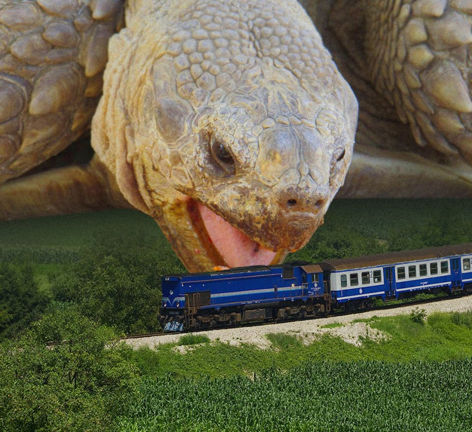 Turtles and Trains
